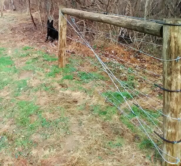 An end-braced high tensile electric fence with a farm dog in the background.  The brace wires travel near the high tensile wires and could cause grounding.